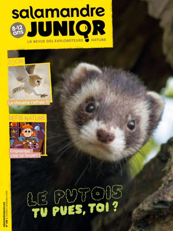 Couverture de La Salamandre Junior n°126