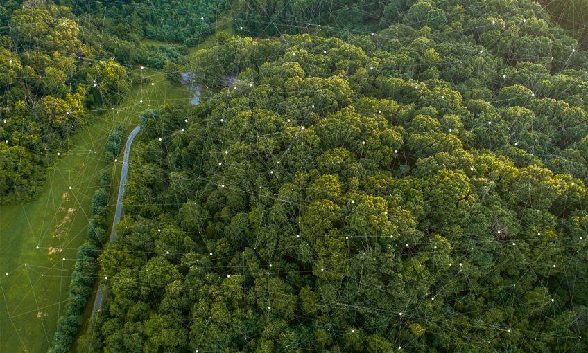 La transition écologique passe par la préservation des forêts