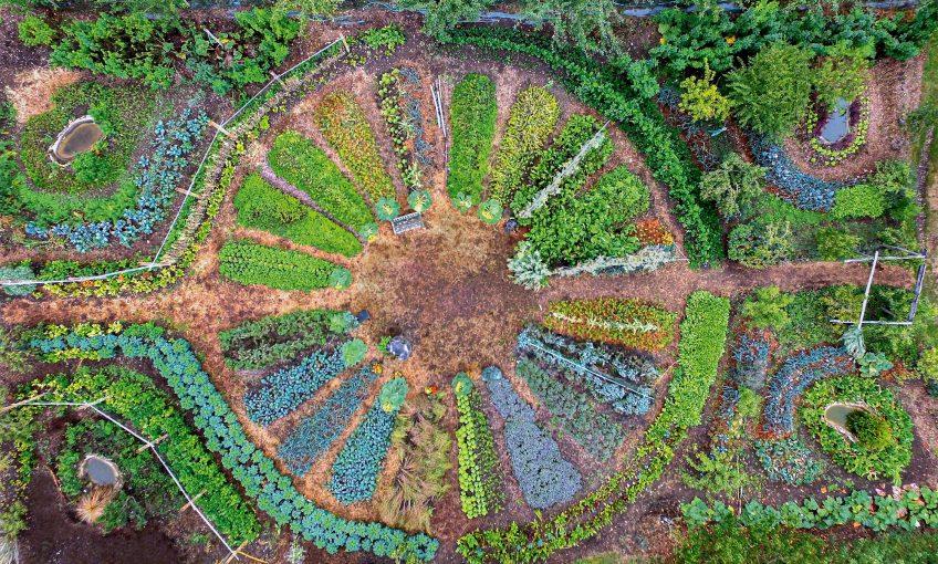 Les champignons peuvent être des alliés des jardiniers