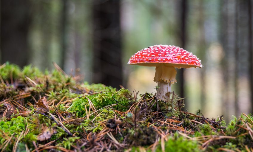 La reproduction aérienne et souterraine des champignons