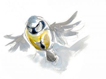 Migration d'automne, observez le grand défilé des oiseaux