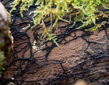 Wood Wide Web, le mystérieux réseau souterrain des champignons