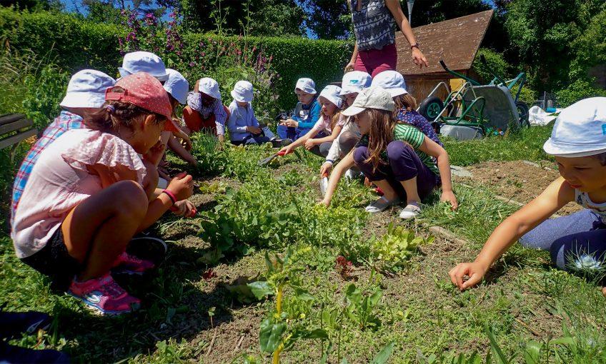En Suisse, les élèves vont au potager pour se reconnecter à la nature