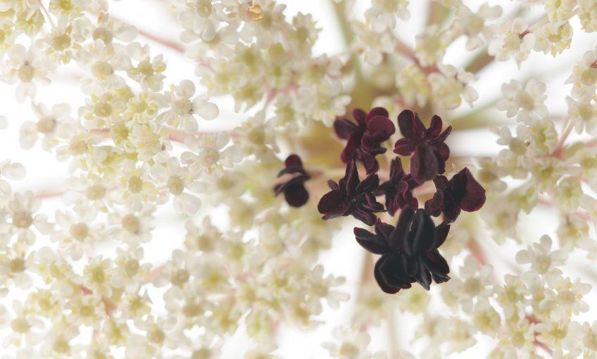 Les fleurs amoureuses le nouveau livre photo de La Salamandre