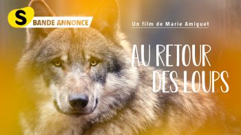 DVD Loup_YouTube Bande annonce_1280x720px