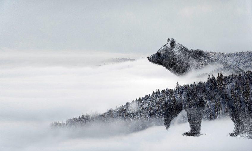 Dossier complet sur l'ours