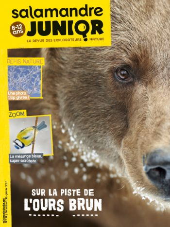 Couverture de La Salamandre Junior n°127