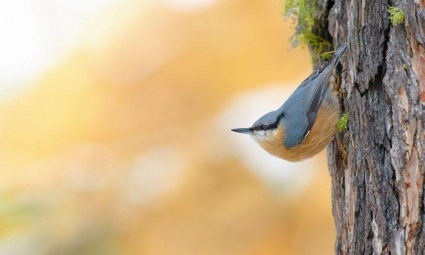 Les plus belles photos d'oiseaux de l'année 2019 selon le vogelwarte