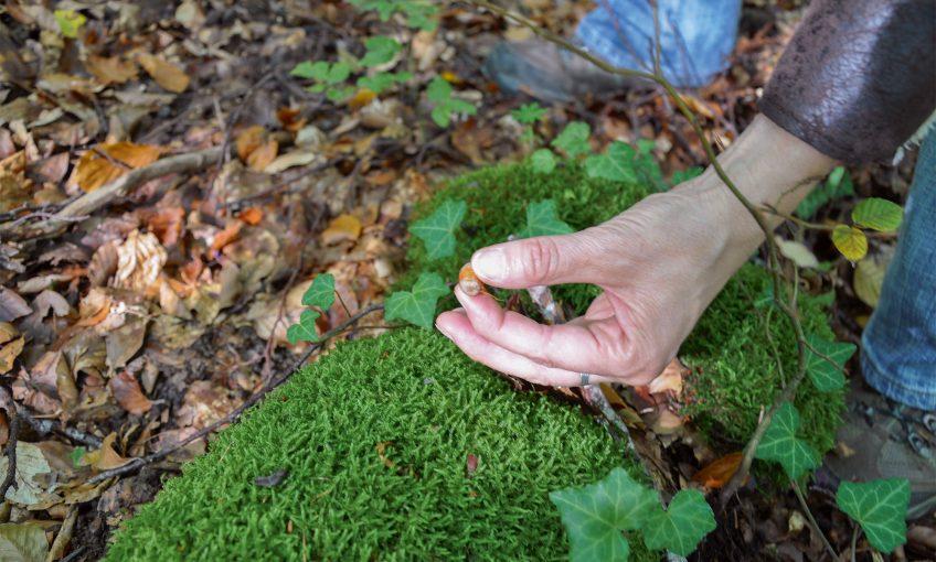 Education à l'environnement, en apprendre plus sur la nature en s'amusant