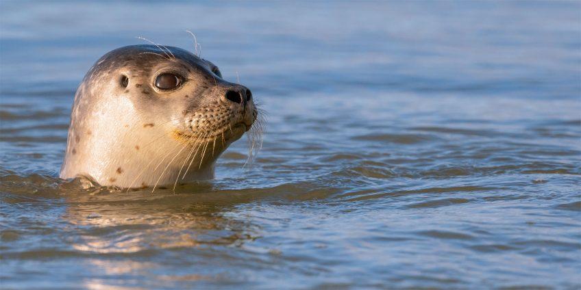 Les phoques du nord de la France en 5 photos