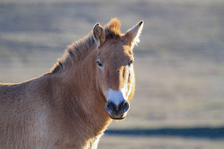 Le Causse Méjean, Mongolie française - Récit de balade