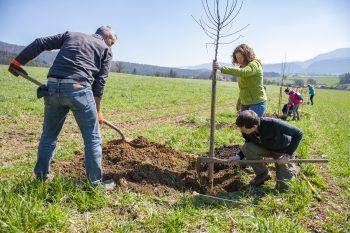 Opération 250 arbres