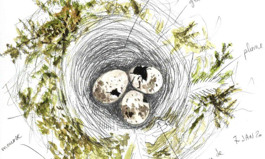 Nid et oeufs abandonnés - La Salamandre