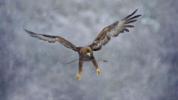 L'aigle, un vrai avion de chasse