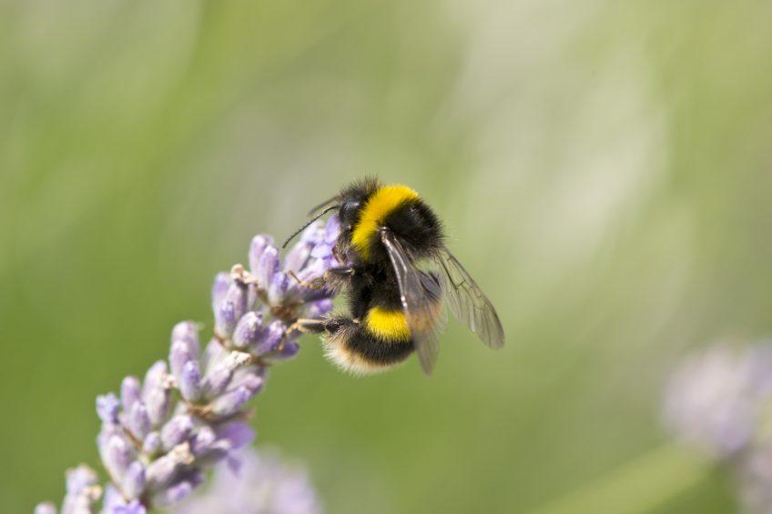 Ceci n'est pas une abeille La Salamandre