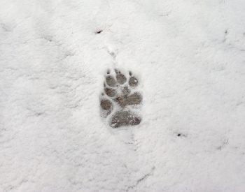 empreinte dans la neige