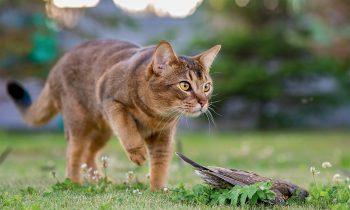 Chat qui a tué un oiseau