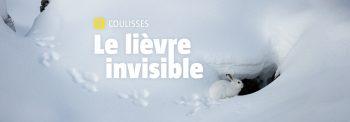 Header Coulisses Le lièvre invisible
