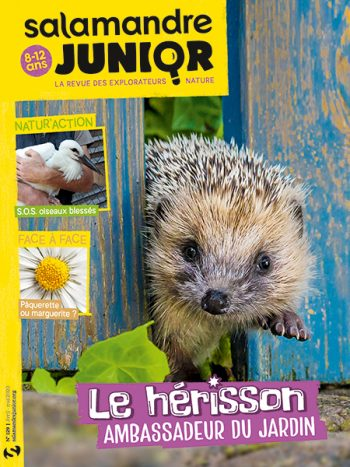 Couverture de La Salamandre Junior n°129