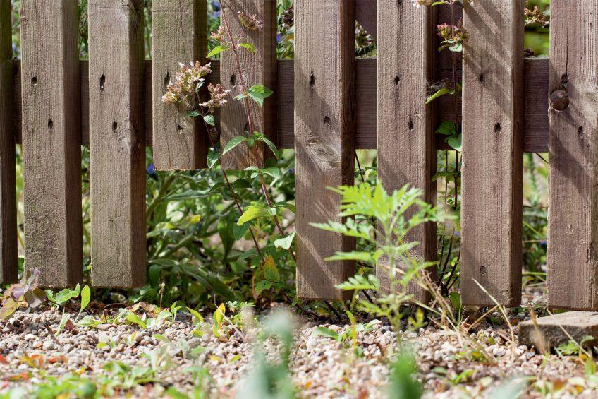 Un jardin parfait pour le hérisson en 8 conseils