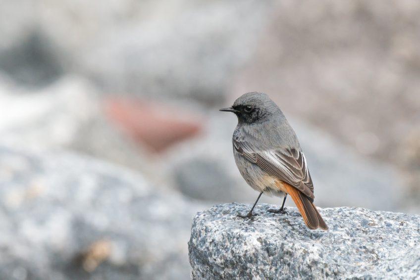 Observez les oiseaux depuis votre lieu de confinement