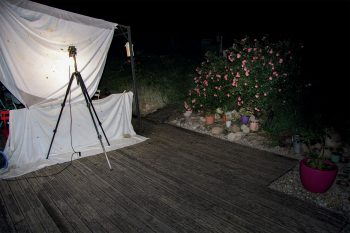488 papillons de nuit observés dans un jardin en trois ans