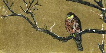 Faucon d'Eléonore dans un arbre mort