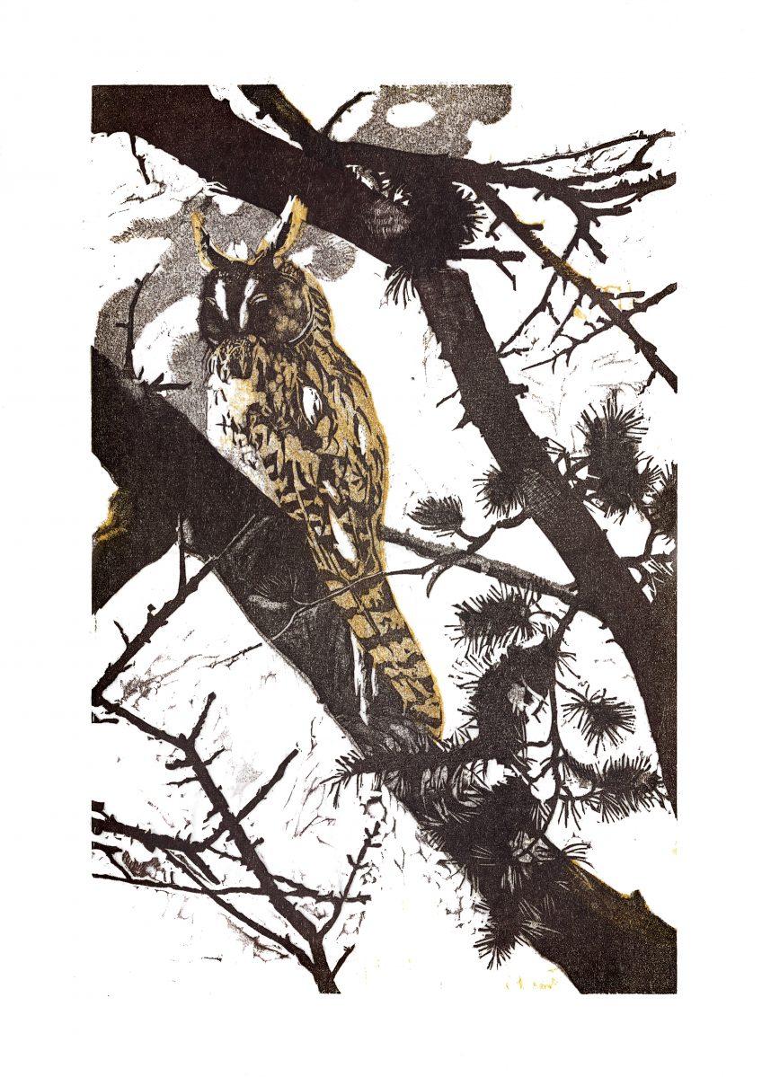 Hibou moyen-duc • Thorens-Glières (Haute-Savoie) • 24 février 1992 • gravure sur bois
