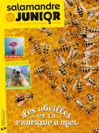 Couverture de La Salamandre Junior n°130