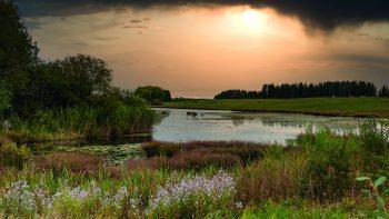 Le petit étang de Frasne, non loin du sentier des tourbières (Doubs).
