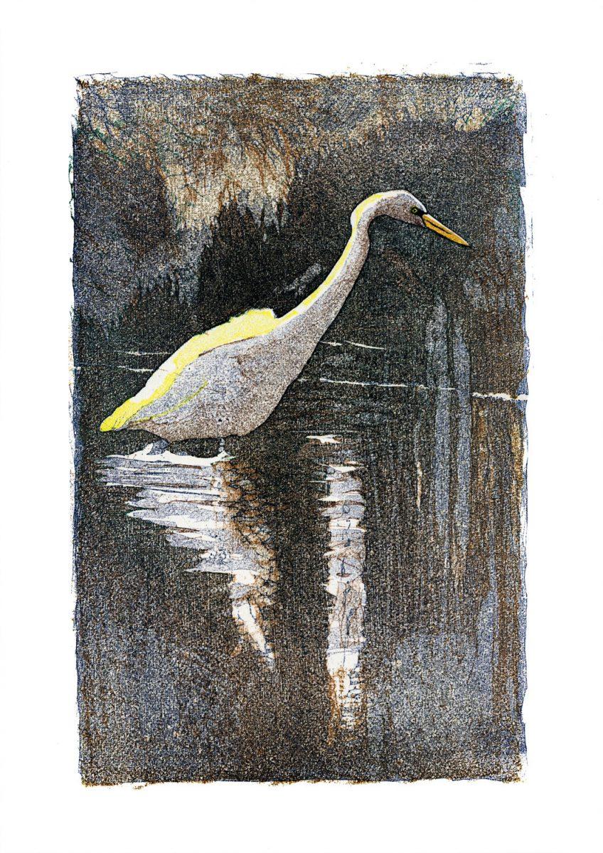 Grande aigrette • Le Crotoy (Somme) • février 2002 • gravure sur bois