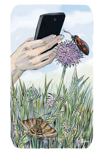 Comment observer les papillons de nuit