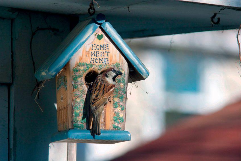 Offrez un logis de rêve aux moineaux dans votre jardin