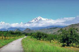 Les vergers du Valais central abritent jusqu'à 20 territoires de moineaux friquets par km2. / © Milene Cabete