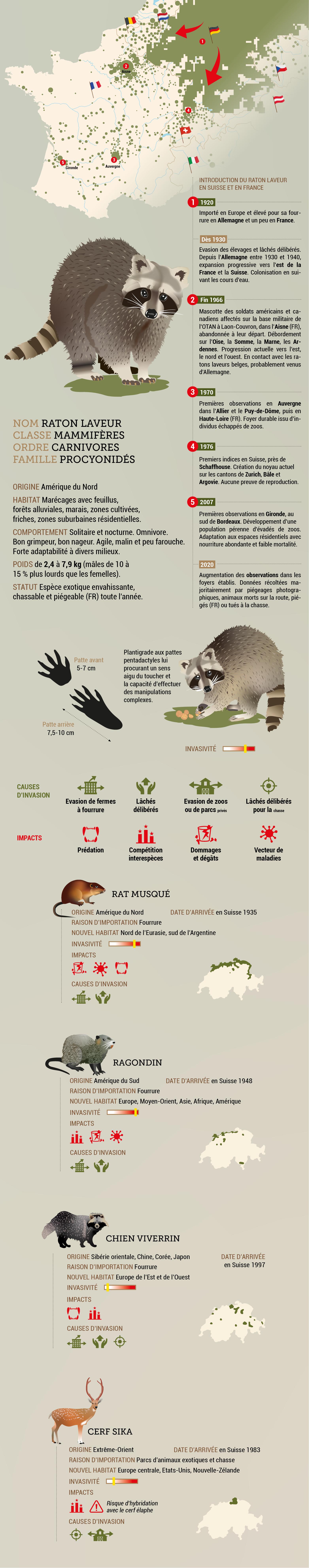 5 mammifères invasifs en Suisse infographie