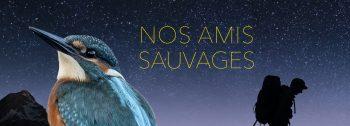 Vignette_AmisSauvages_Titre_Episode3_MartinPecheursite