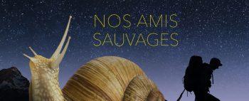 Vignette_AmisSauvages_Titre_Episode6_EscargotHeader