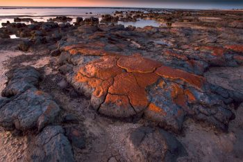 Stromatolithes colonies d'algues bleues.