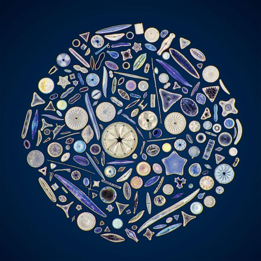 L'apparition des algues brunes, des diatomées aux laminaires