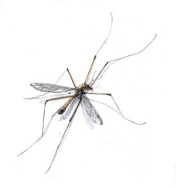 Mille et un squats dans la maison pour les insectes