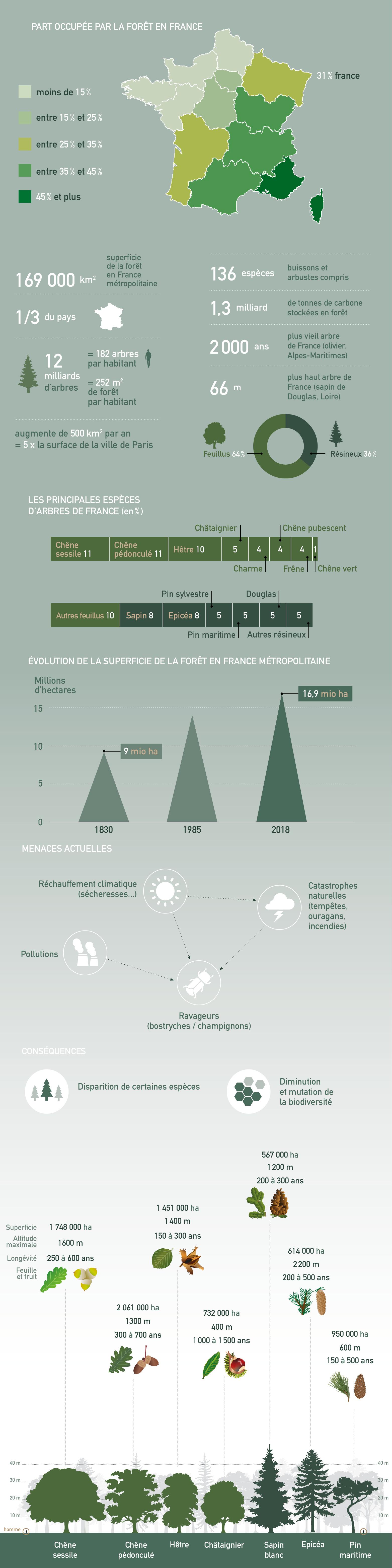 infographie foret france