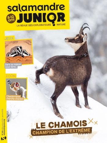 Couverture de La Salamandre Junior n°133