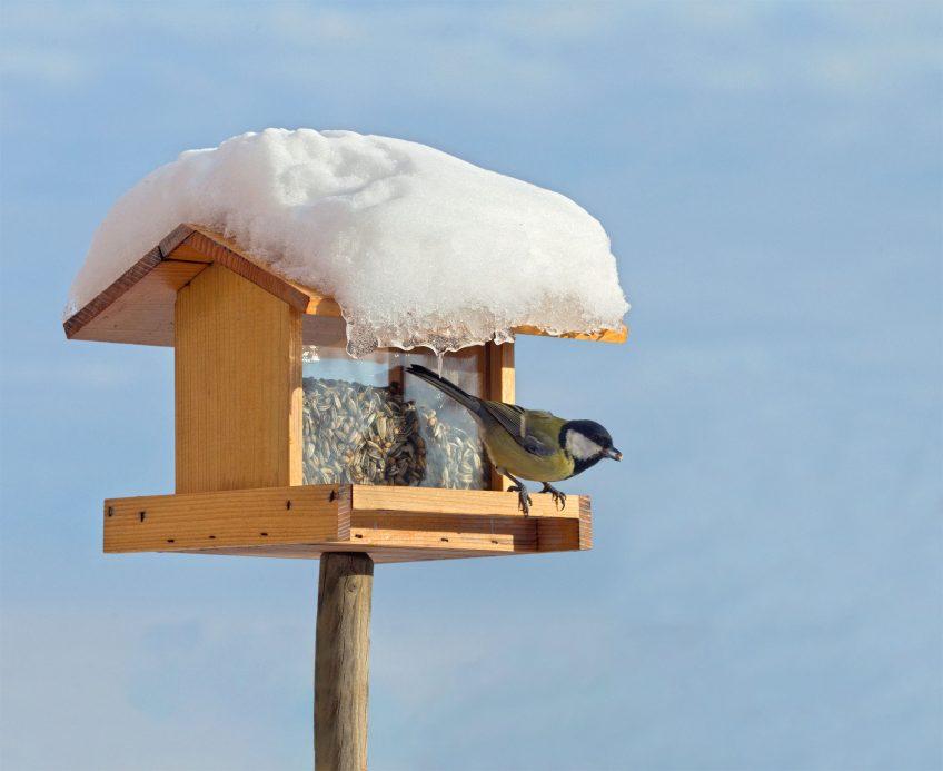 Mangeoire : 4 conseils pour sécuriser son installation pour les oiseaux