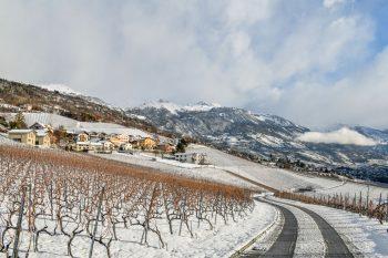 Le long du chemin, les vignes cachent encore quelques raisins abandonnés qui font le bonheur des chocards à bec jaune.