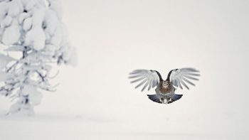 Objectif oiseaux - #10