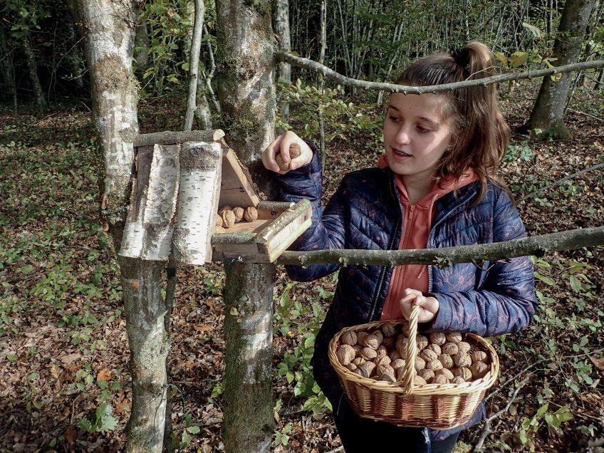 Ouvrez un resto pour l'écureuil dans votre jardin l'hiver