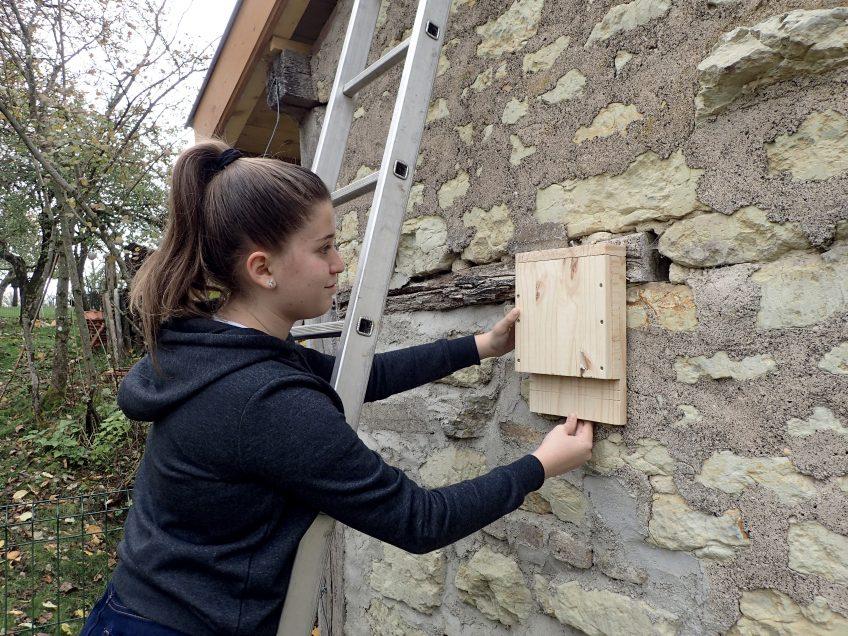 Construisez un nichoir à chauves-souris