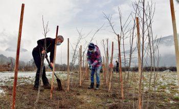 Aubépines, églantiers, prunelliers… Ces arbustes fruitiers épineux offrent le gîte et le couvert à de nombreux passereaux nicheurs.