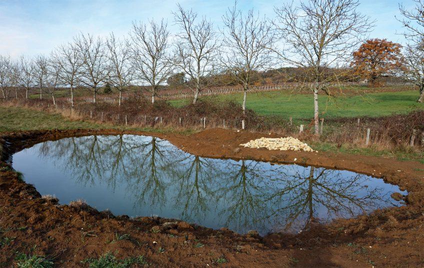 Rainette : La Salamandre finance la création d'une mare dans le Jura