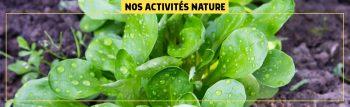 nos-activites-nature-HEADER